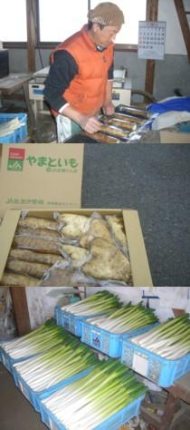 田島さんの大和芋と白ネギ