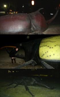 群馬県に巨大昆虫現る、しかも3匹も!!